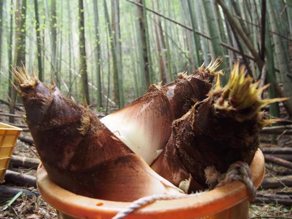 暮らす、食べる、糸島 in 森、道、市場
