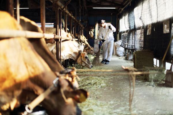 森、道、市場 ミルク工房そら