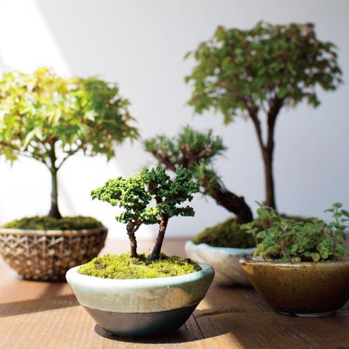 森、道、市場2019 塩津植物研究所