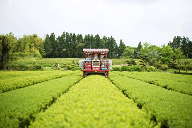 森、道、市場2019 宮崎上水園