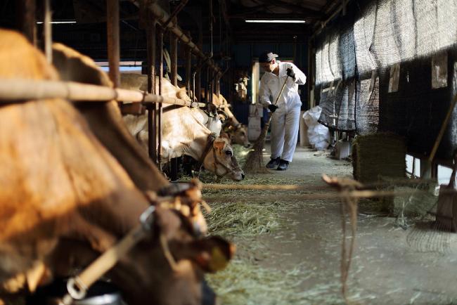 森、道、市場2019 ミルク工房そら